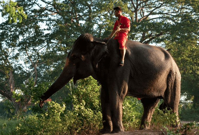 How The Elephant And The Rider Can Help Motivate Your Team