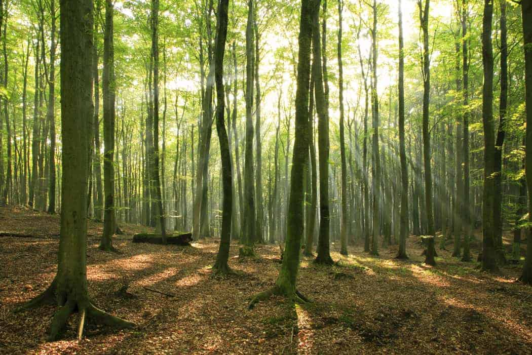 employee performance reviews help you see the forest for the trees