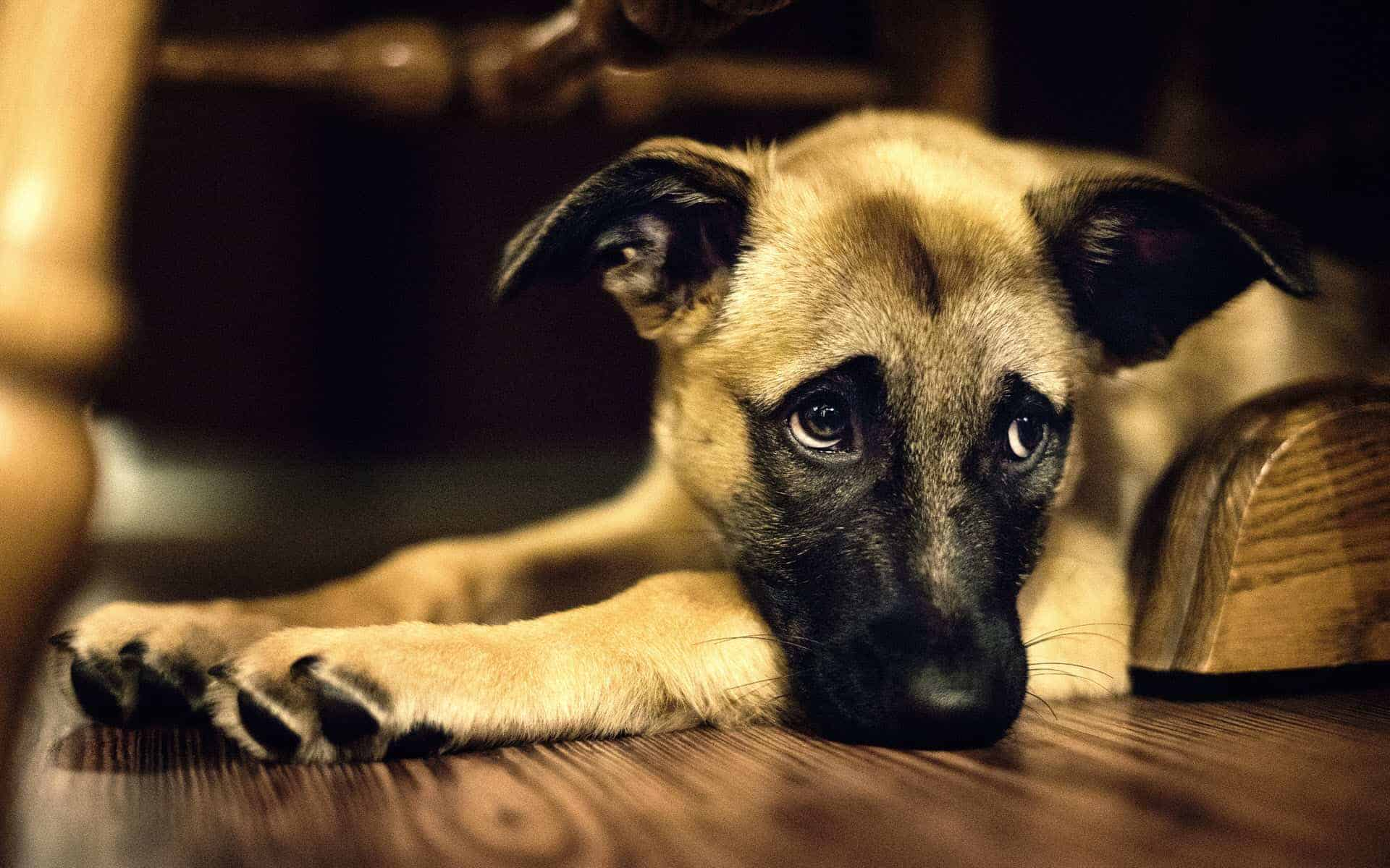 learned helplessness employee engagement shocked dogs teach us an important lesson
