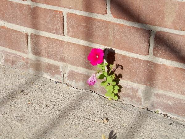 resilience like a flower in cracks
