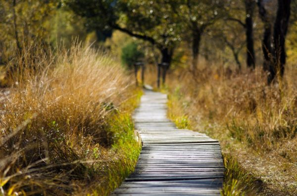 how to change your mindset take a walk to be hapy